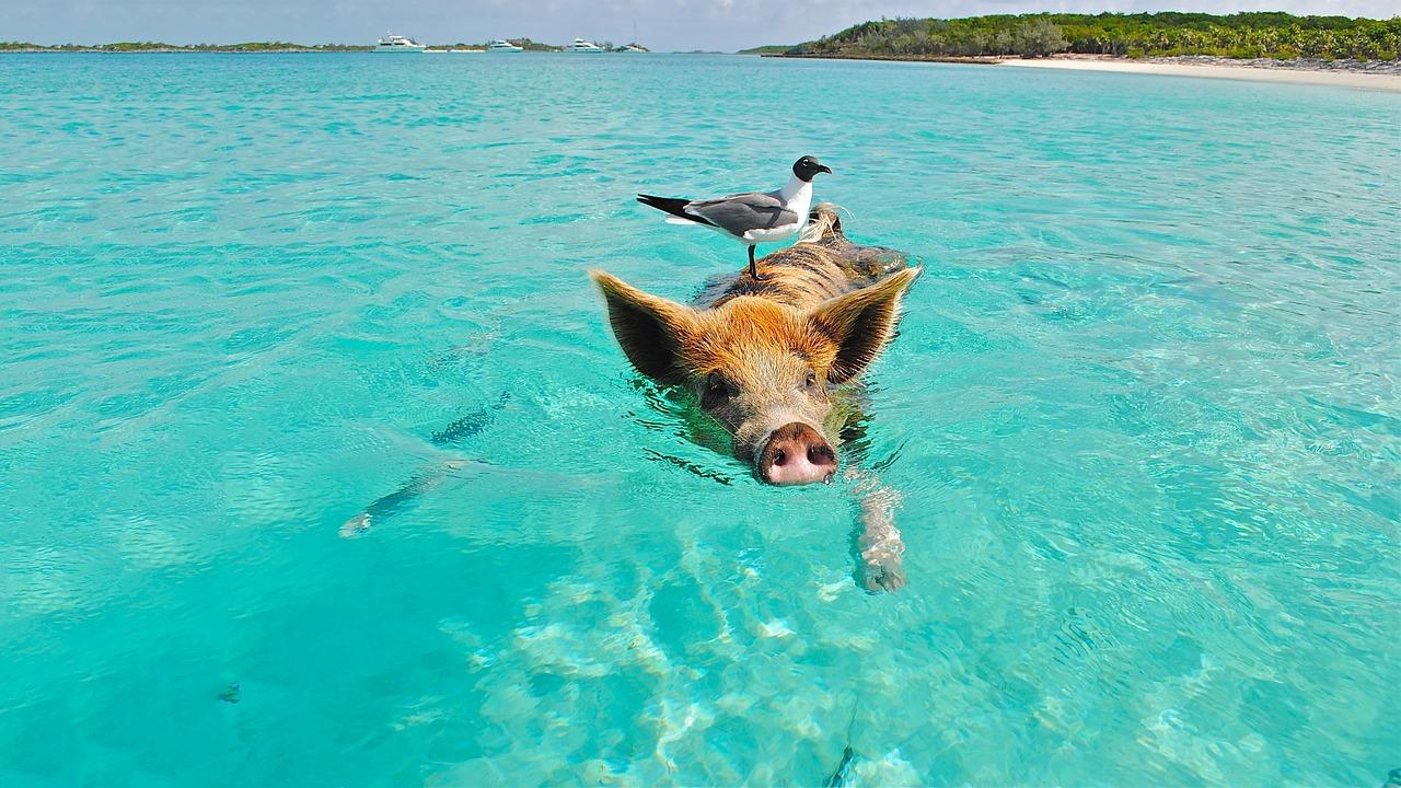 5 redenen waarom je de Caraïben moet bezoeken