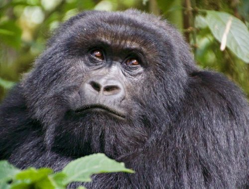 Rwanda Best in Travel award Lonely Planet