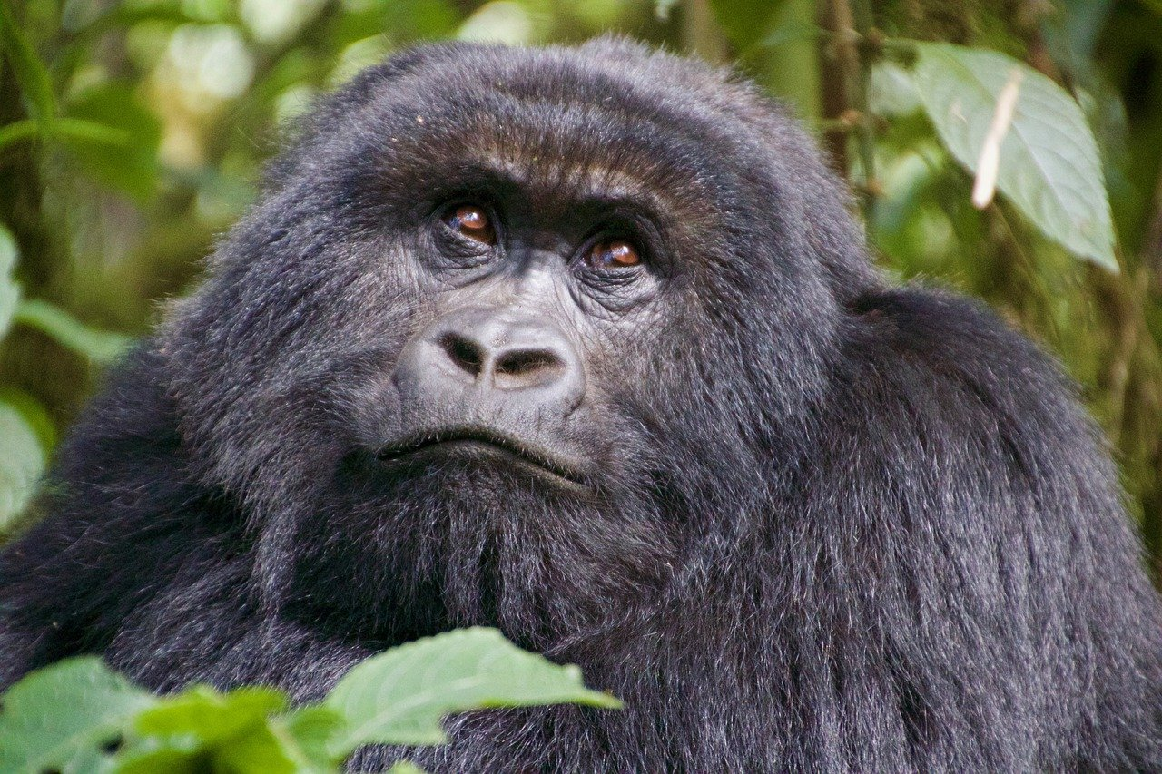 Rwanda Best in Travel award Lonely Planet