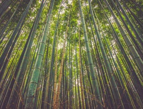 bamboekleding milieuvriendelijk