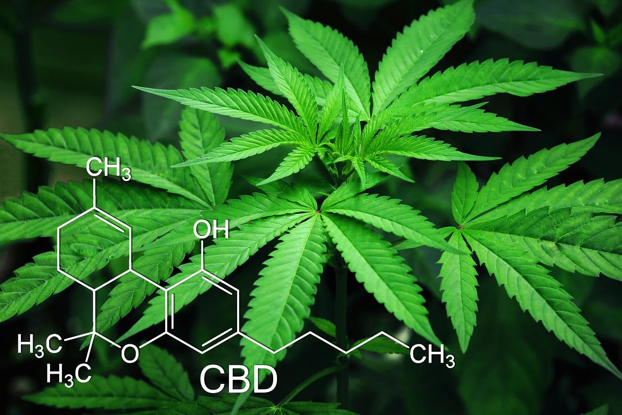 cannabis wiet gebruikers gelukkiger