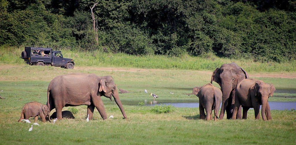16 tips reis naar Sri Lanka