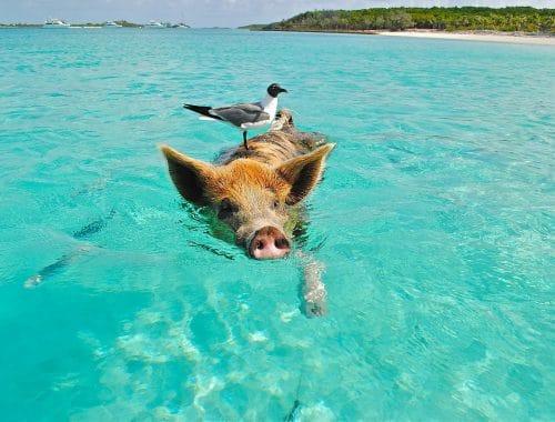 fyre festival bahamas prive eiland te koop