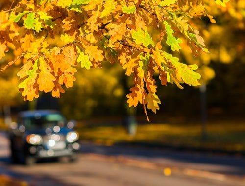 herfstproof veilig rijden herfst