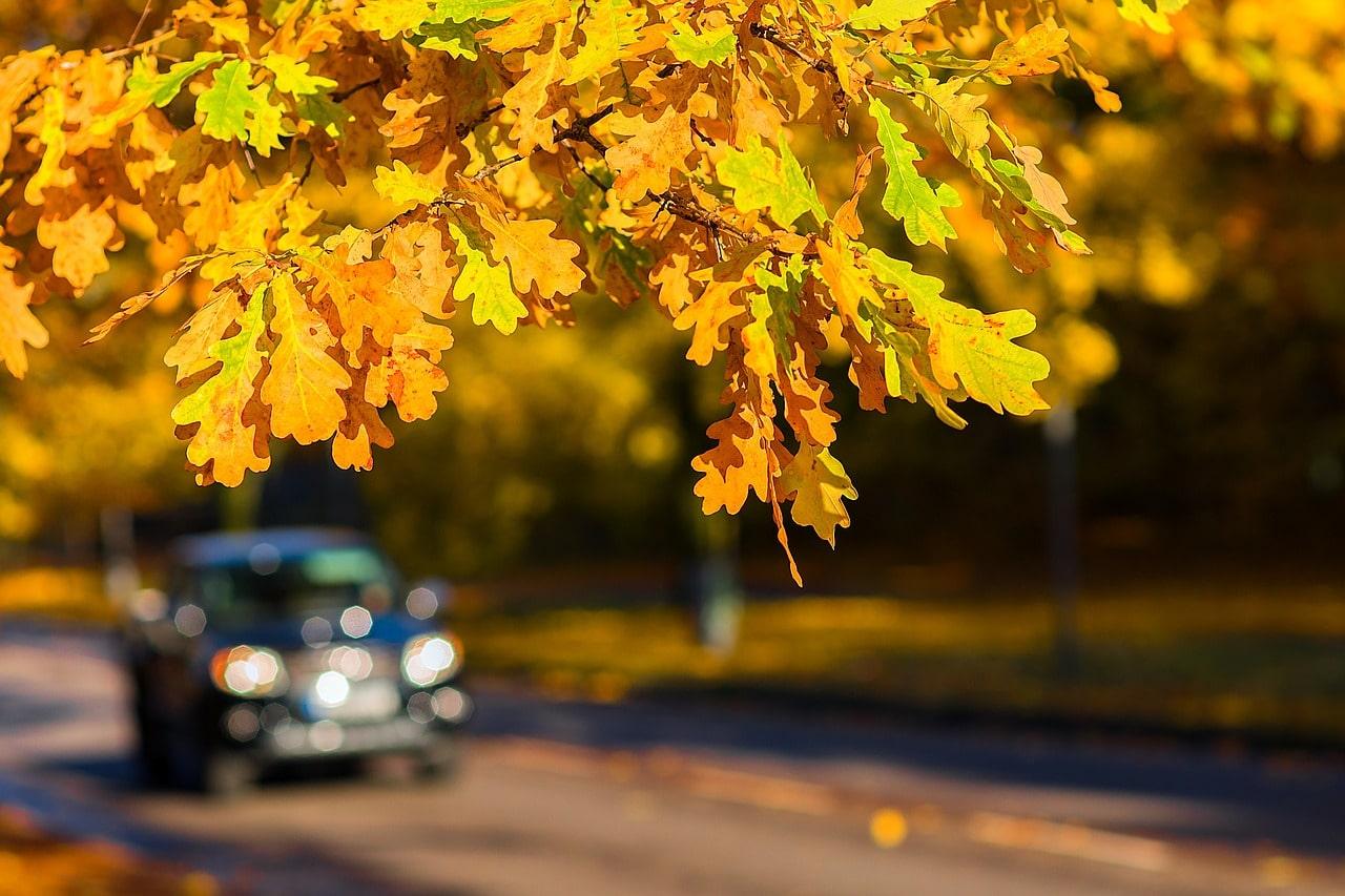 Afbeeldingsresultaat voor veilig rijden in de herfst