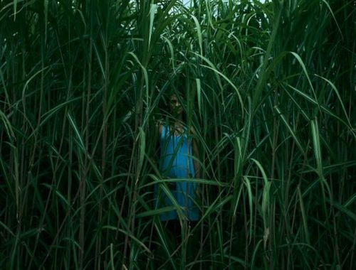In the Tall Grass - Stephen King horrorfilm Netflix