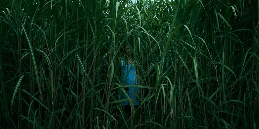In the Tall Grass - Stephen King horrorfilm Netflix