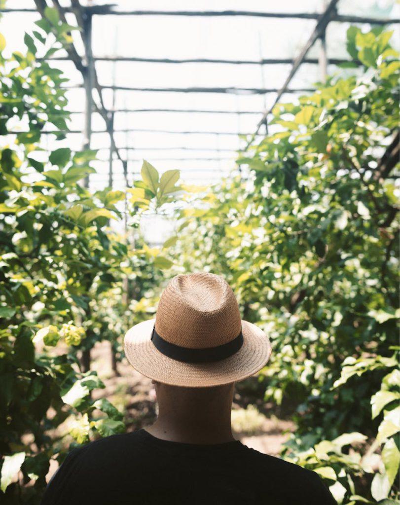 sorrento villa massa citroengaard