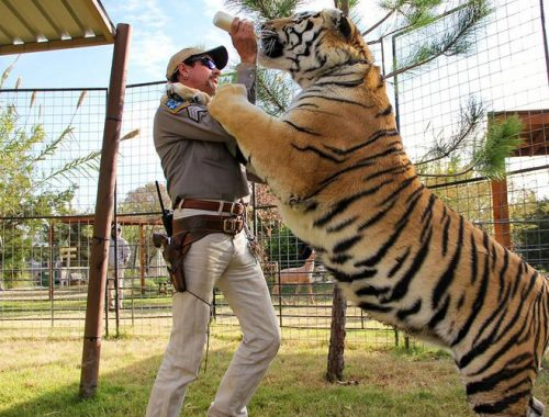 Siegfried & Roy nieuwe Tiger King documentaire