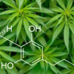 wat is cannabidiol cbd