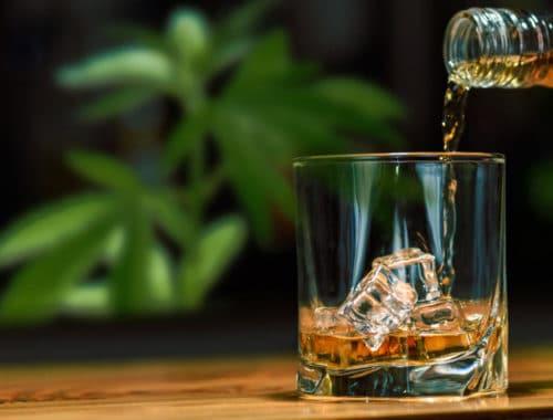 wiet beschermt lever tegen alcohol