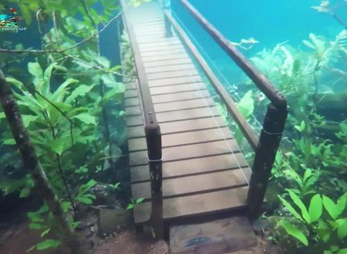 Rio de Prata onderwaterbos duiken